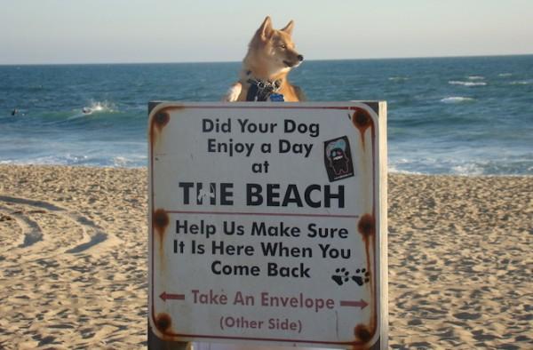 4-california-dog-beaches-huntington-dog-beach---x----670-440x---